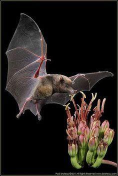 Bat on black