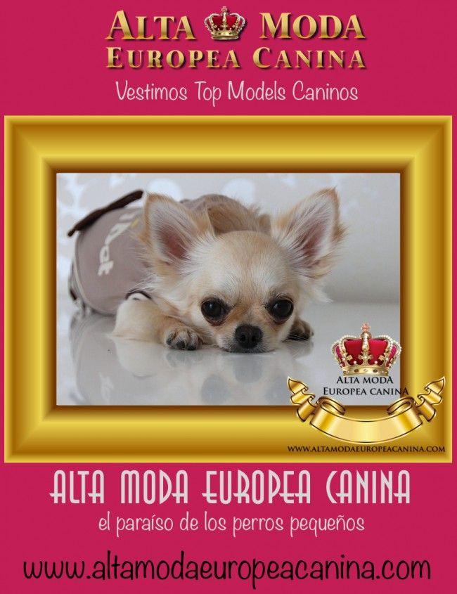 alta moda canina, ropa perros
