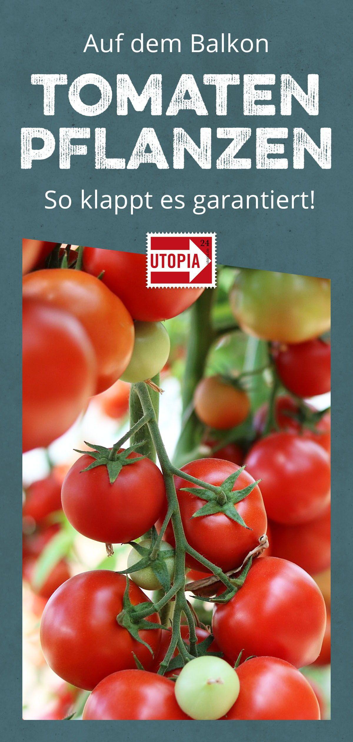 Tomaten pflanzen auf dem Balkon: Tipps & Tricks