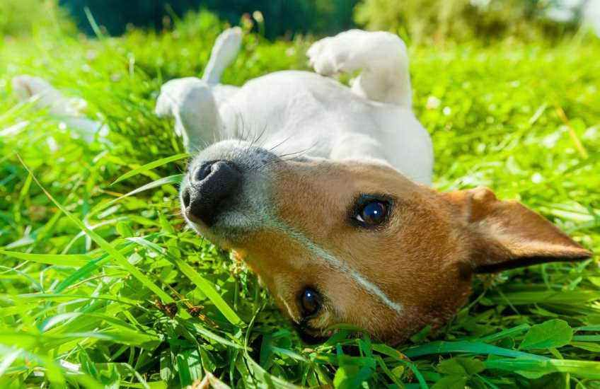 Can dogs take claritin