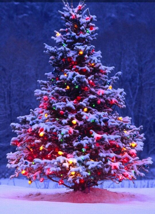 Pin by Sande Wiedman on iPhone wallpapers Pinterest Christmas