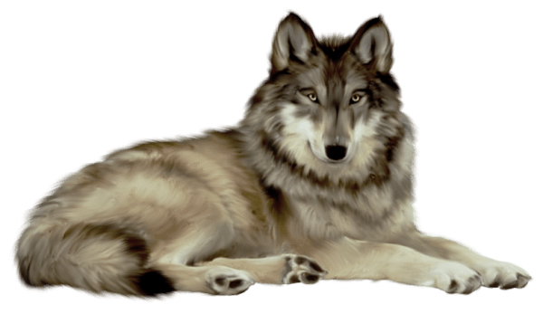 White Wolf Png Image Picture Download Png Image Animals Wolf Clipart Cartoon Animals