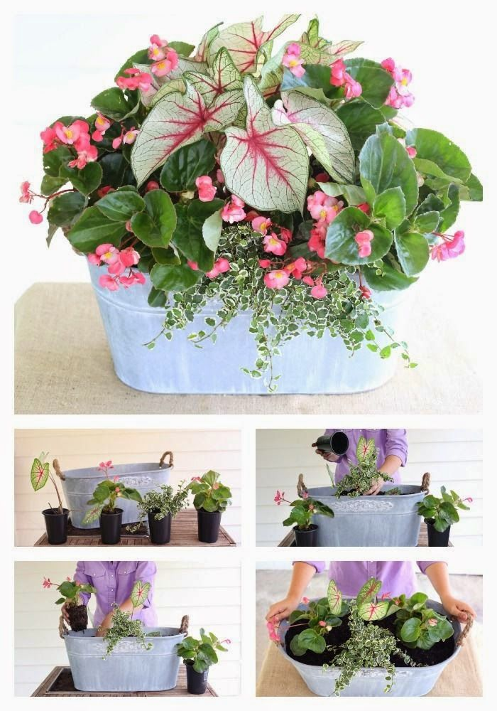 Perfect for the porch a spring container garden by carmen johnston a spring container garden by carmen johnston gardens potted flowersflower mightylinksfo Image collections