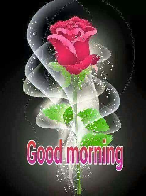 Good Morning With Pink Rose Flower Bud Art Morning Greetings Quotes Night Wishes Morning Greeting