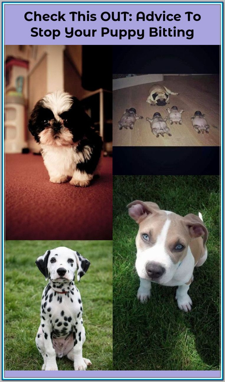 Finding Your Best Options For Puppy Obedience Training Puppy Obedience Training Obedience Training Dog Training Obedience