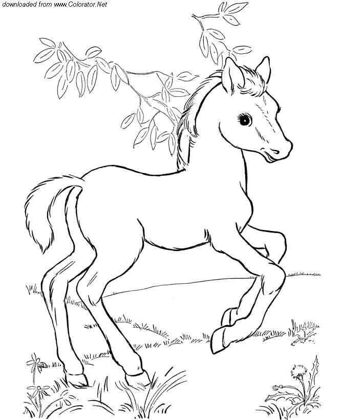 Nett Druckbare Baby Pferd Malvorlagen Fotos - Ideen färben ...