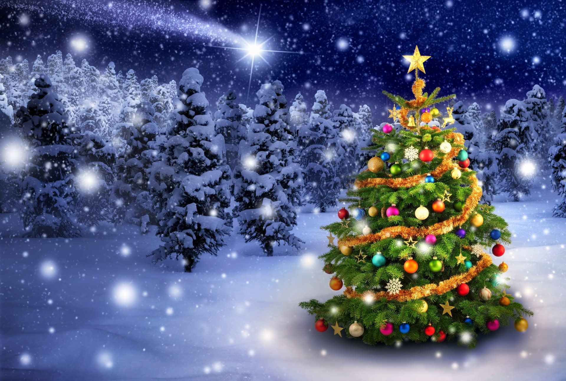 Holiday Christmas Holiday Christmas Tree Light Forest Snow Wallpaper