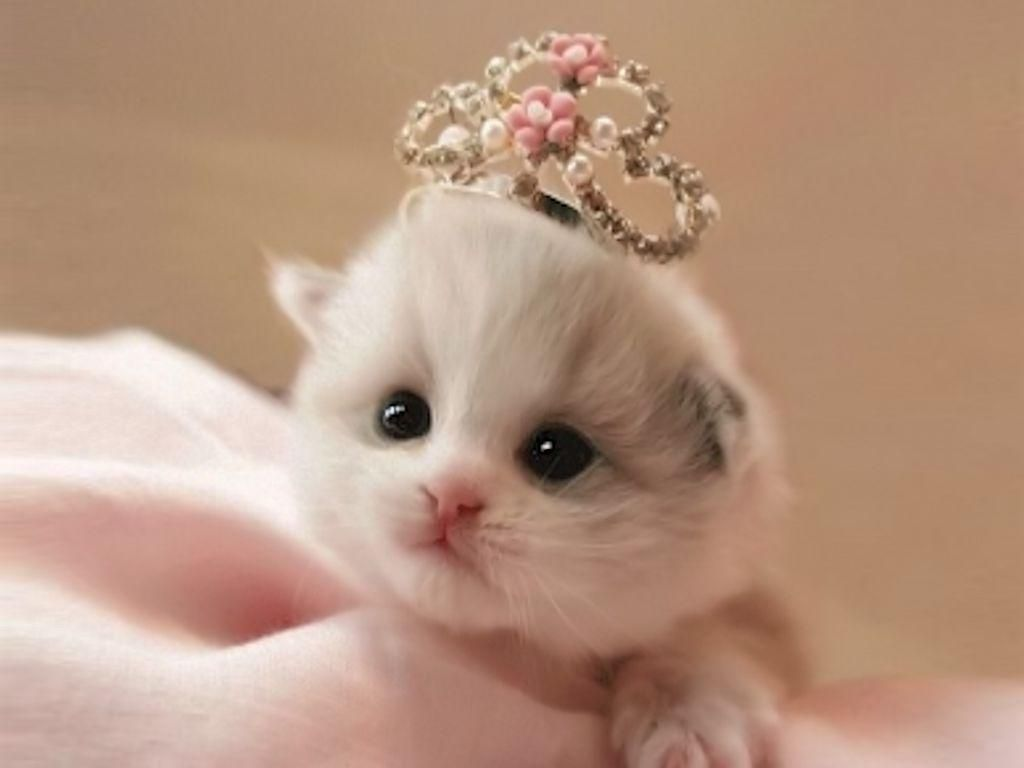 Princess Jounal Pink With Cat Little Princess White Blanket Pink Cute Cat Kittens Cutest Cute Cats Cute Animals