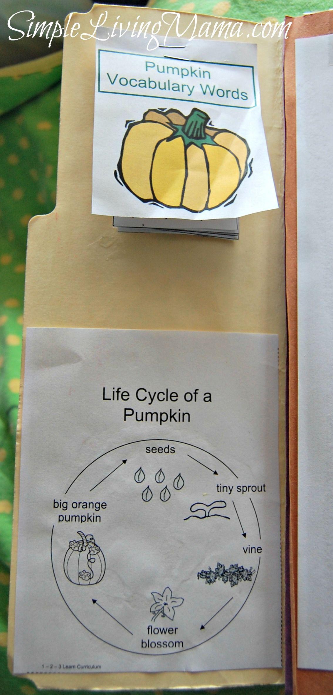 Pumpkin Themed Lapbook For Pre K And Kindergarten