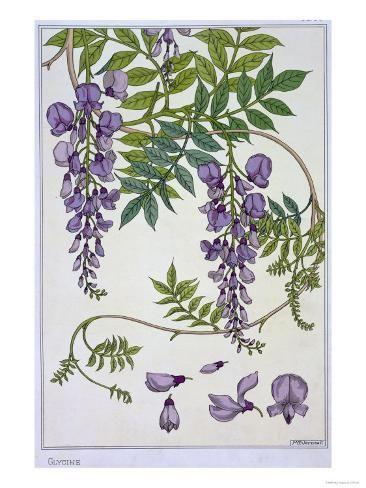 Botanical Diagram Of Glycine Giclee Print Eugene Grasset Art Com In 2020 Flower Art Flower Painting Botanical Drawings
