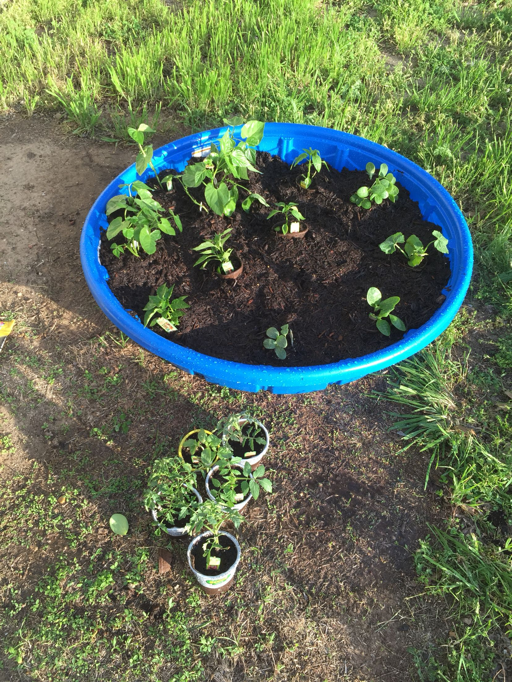 cheap garden idea!! kiddie pool vegetable garden. drill holes in the