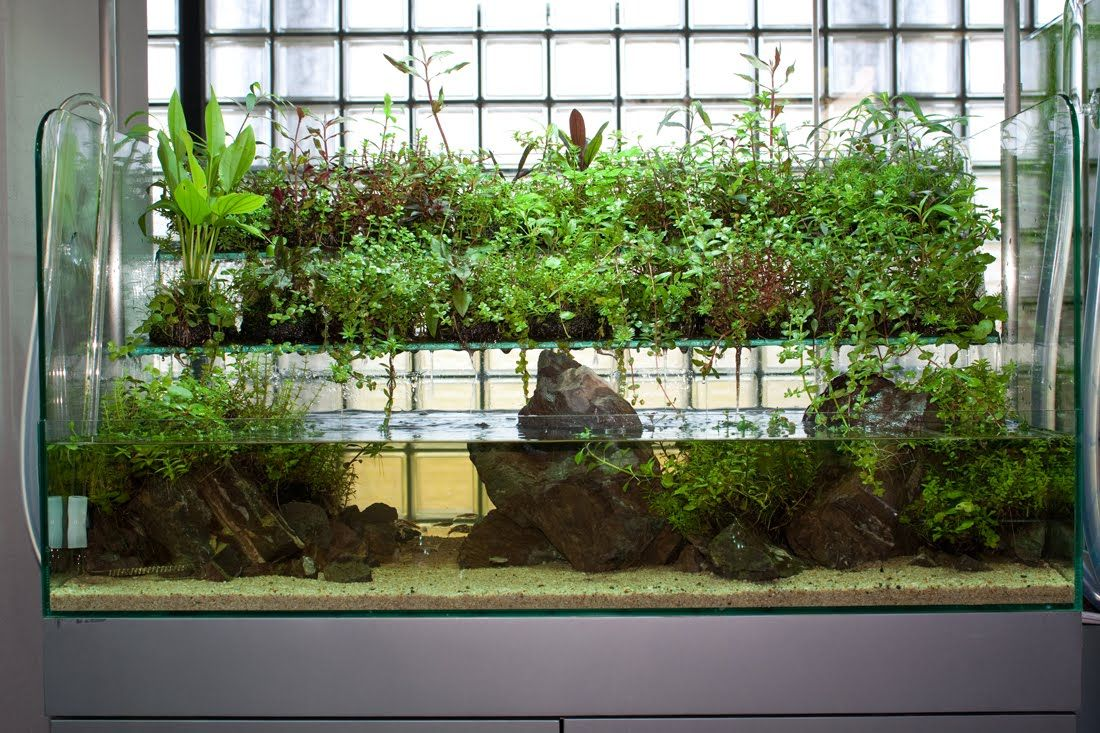 Wabi kusa aquascape inspirations pinterest aquariums for Waterfall fish tank
