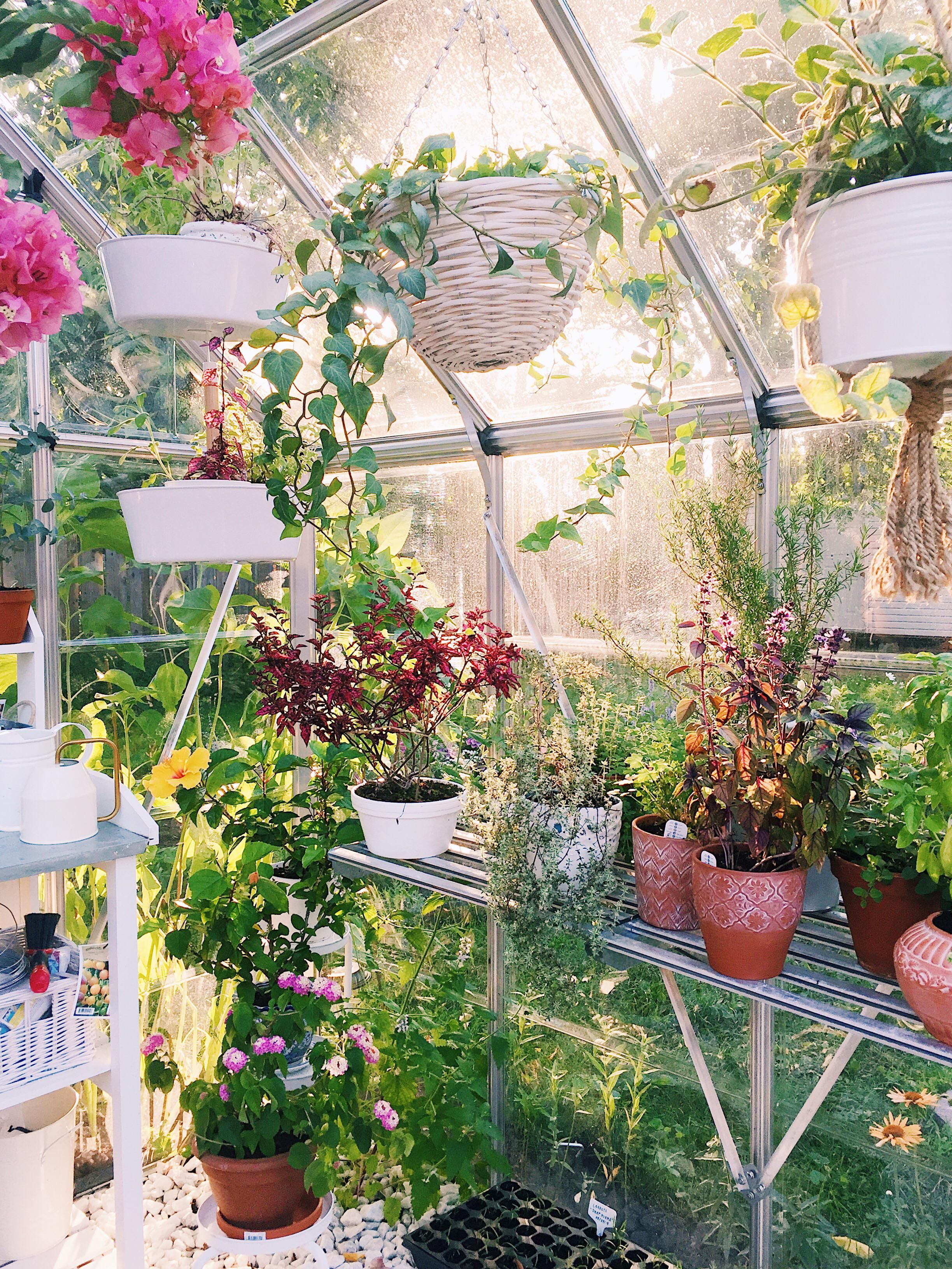 Our Greenhouse Is Looking Cute This Season Gardening Garden Diy Home Flowers Roses Nature Landscaping Horticu Greenhouse Easy Garden Planting Flowers