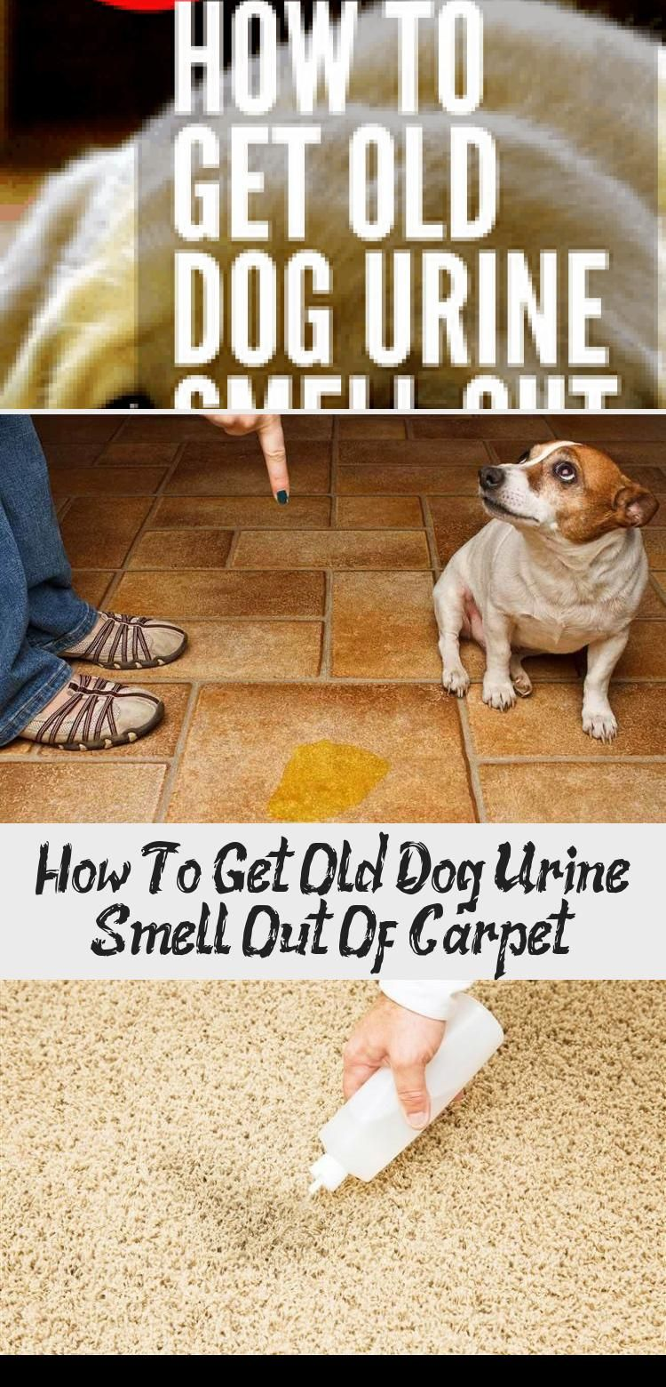 How To Get Old Dog Pee Smell Out Of Carpet Whole House Smell Like Dog Urine It S Probably In The Carpet Check Out These Pet Owner Cleaning Hacks To Get It Ou