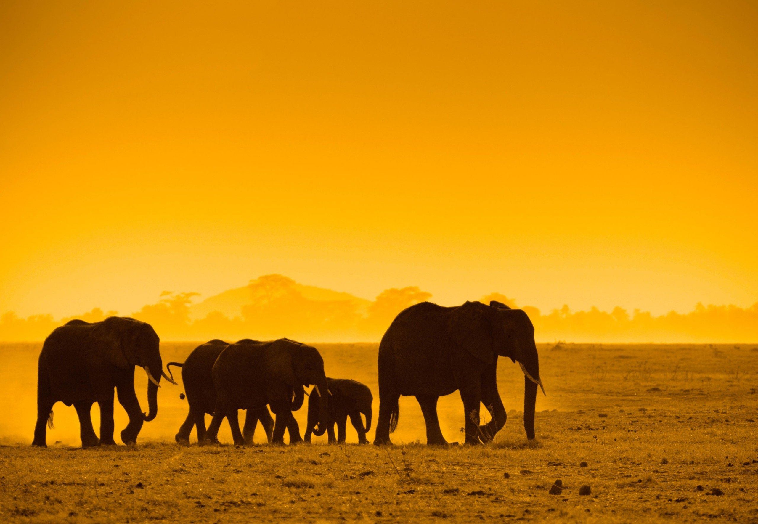 Elephants In The Living Room Home Page Elephant Life Save The