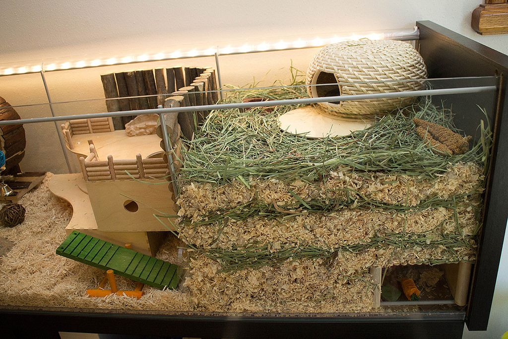 Right deep substrate burrowing area gerbil hamster for Ikea hamster cage