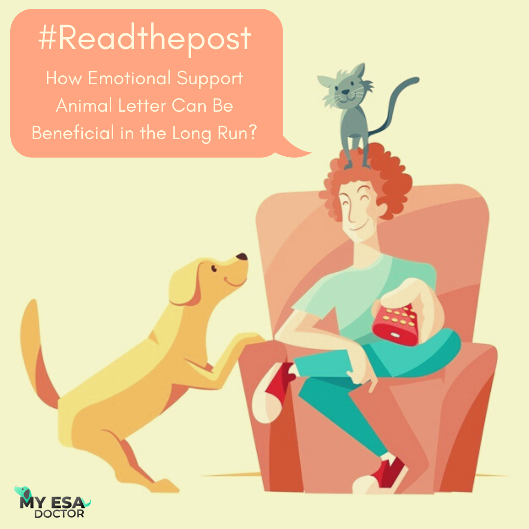 How Emotional Support Animal Letter Can Be Beneficial in