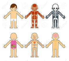 Risultati immagini per muscoli per bambini