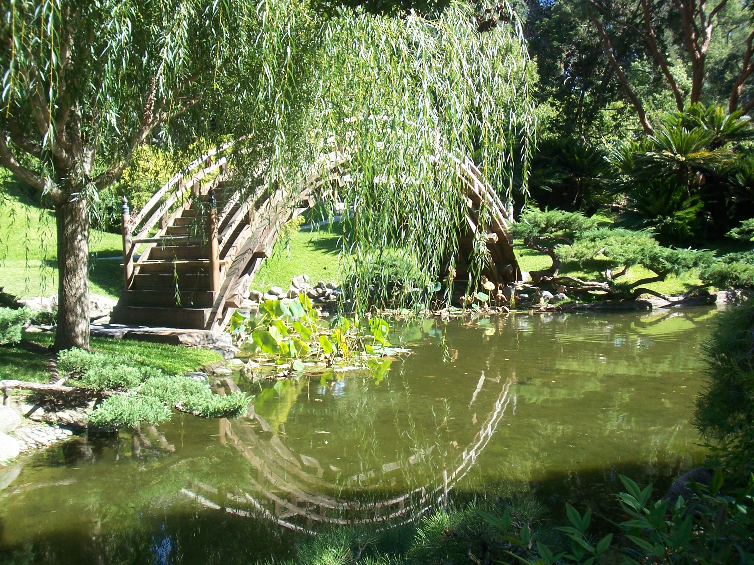 Japanese Garden At The Huntington Library Pasadena