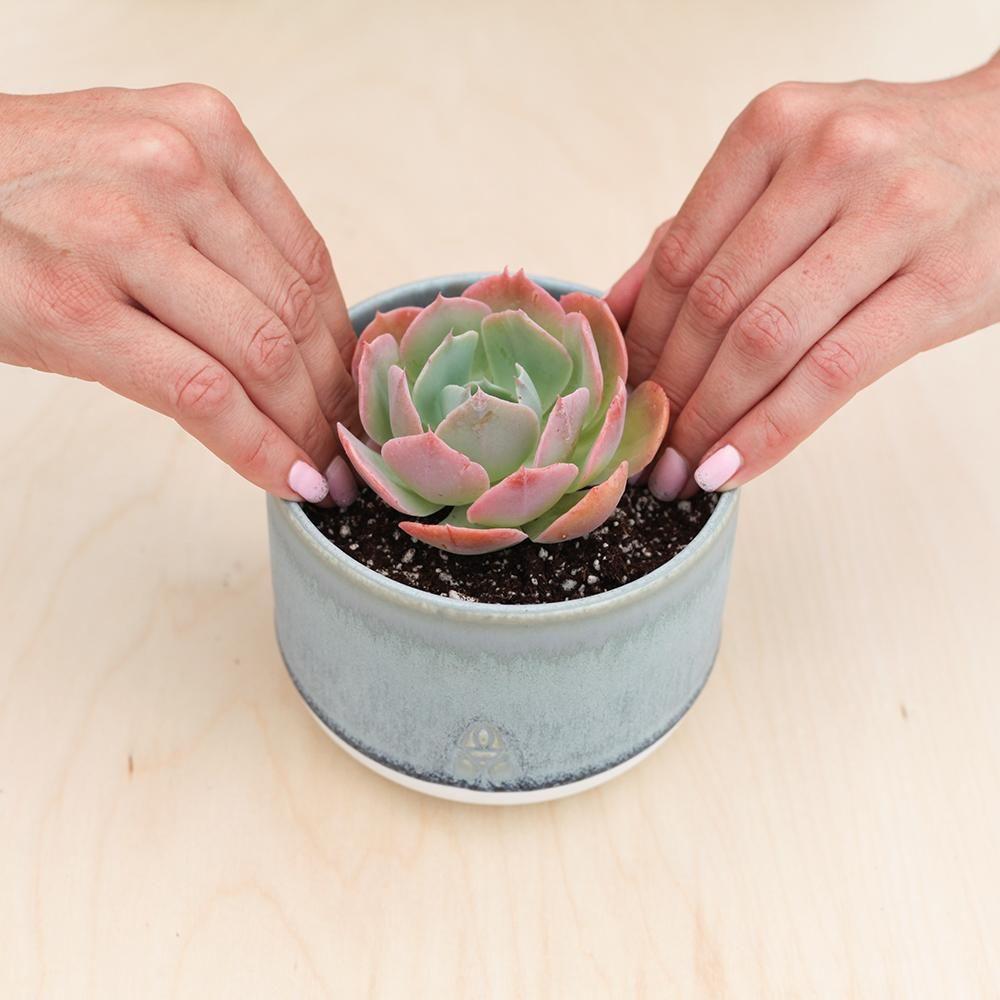 How to plant succulents succulents plants planting