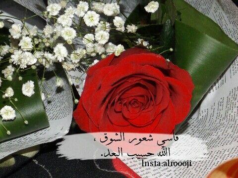 قاسي شعور الشوق الله حسيب الب عد Flowers Rose Plants