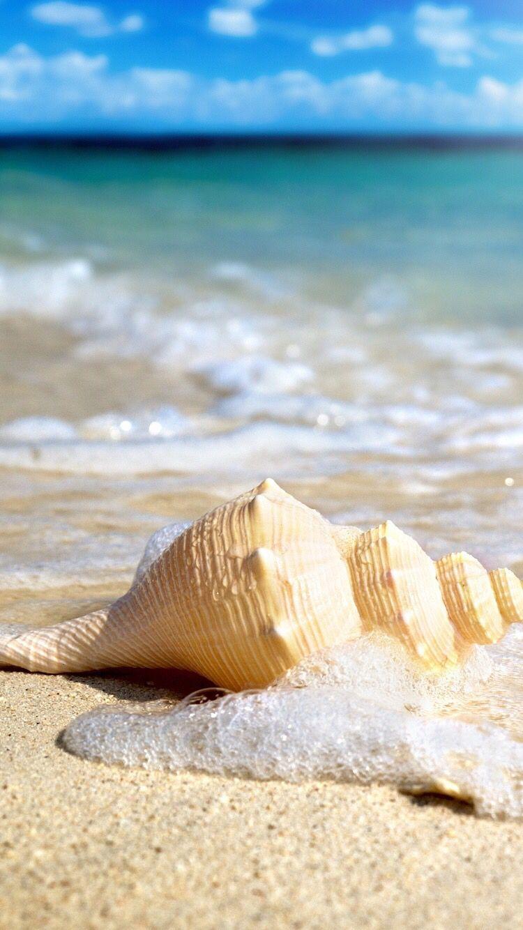 I Love The Ocean Fond Ecran Iphone 6 Fond D Ecran Telephone Fond D Ecran Tropical