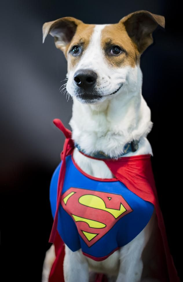 Adopt Dillon D64852 on Dogs, Pets, Animal shelter