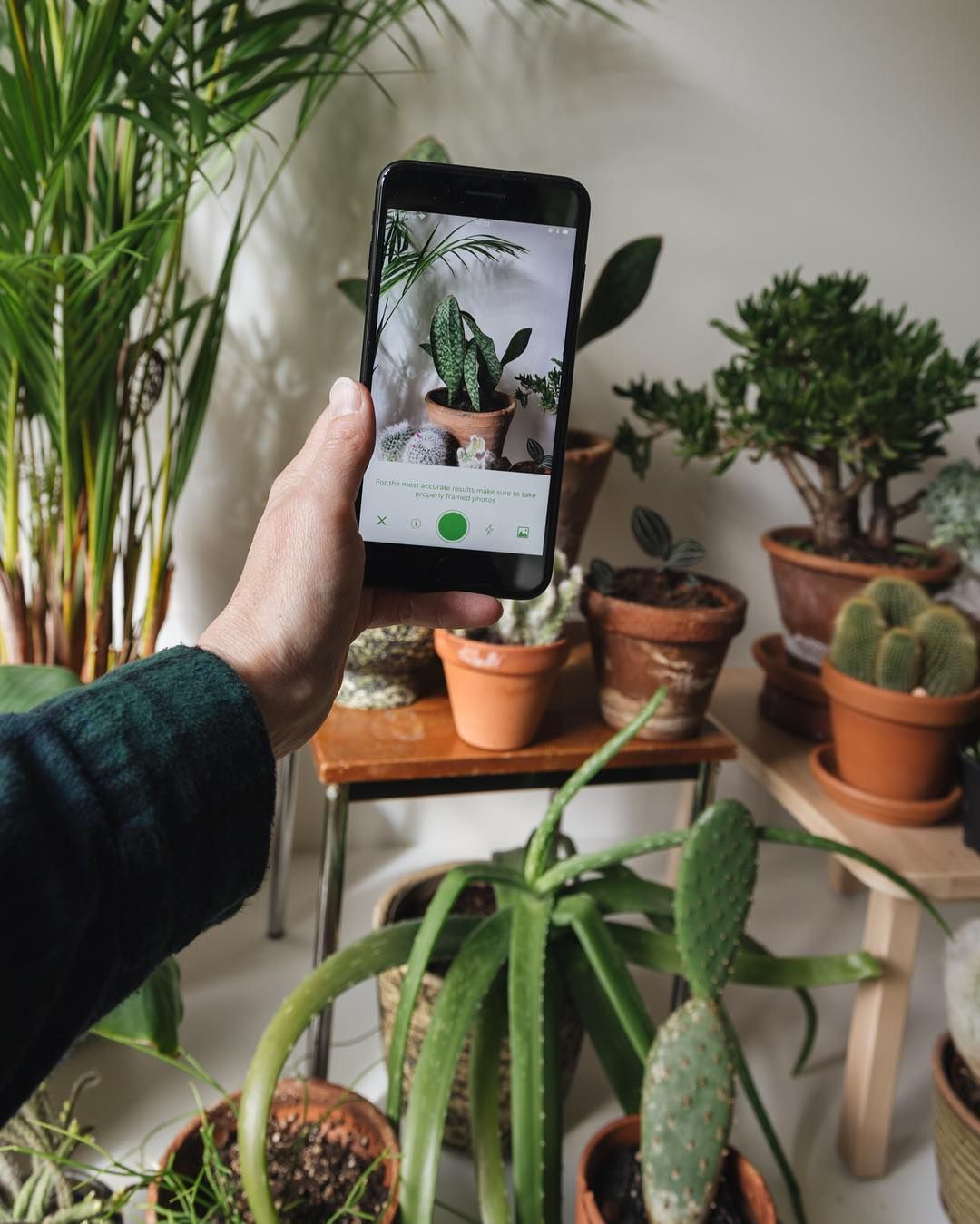 advertisement PlantSnap This app can help you to