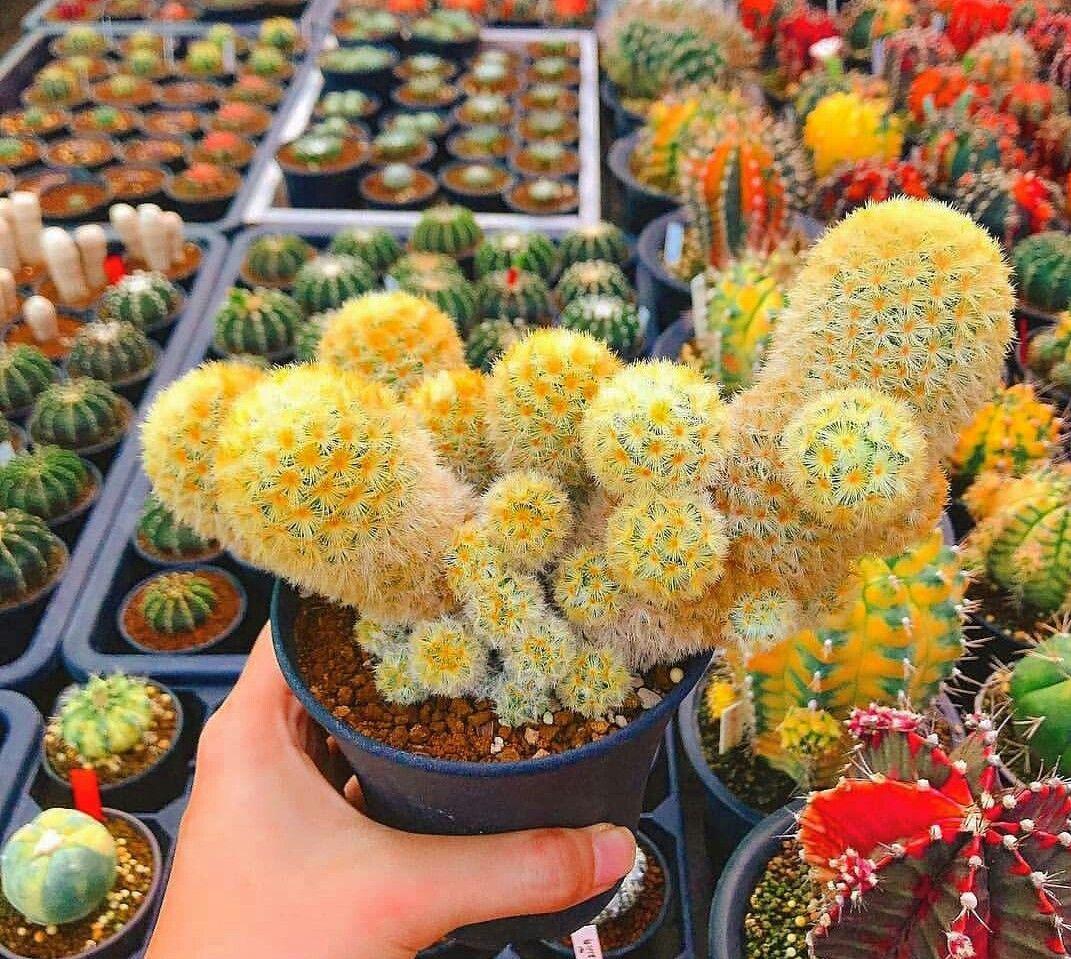 Imagem De Cactus Succulent Por Nilgun Sungu Plantas Com