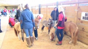 Animals have special magic to delight and comfort us, no matter what our age! Thank-you, Veteran and Thanks, Stacey of Special Equestrians! #McKeeversFirstRide #minihorses #equinetherapy #hippotherapy #ATLevent