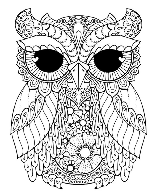 Lovely Owl Coloring Canvas Canvas On Demand With Images