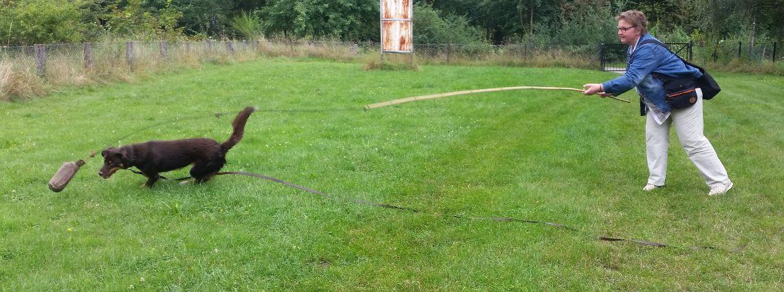 Reizangel Webinar Mit Bildern Staffordshirebullterrier Hunde