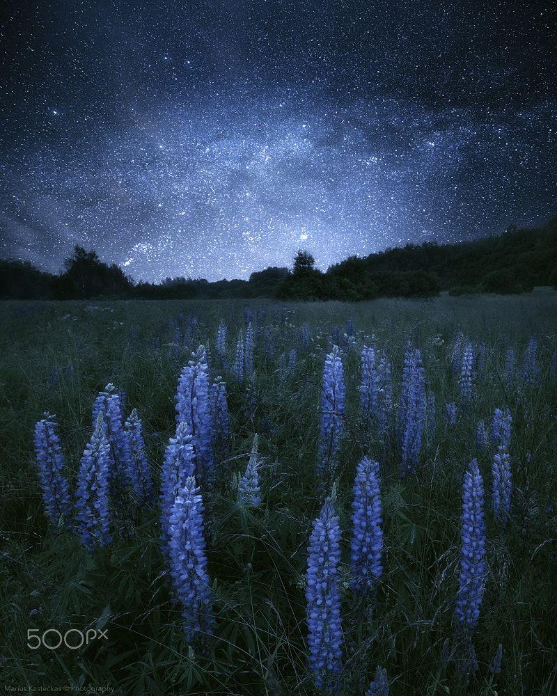 Lupine At Night Https Www Facebook Com Mariuskasteckas Ie Night Scenery Night Landscape Mountains At Night