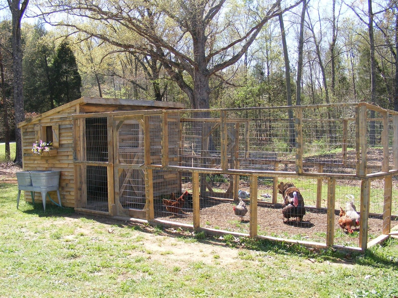 Chicken coops made from wood pallets dngj8nf for Wood pallet chicken coop