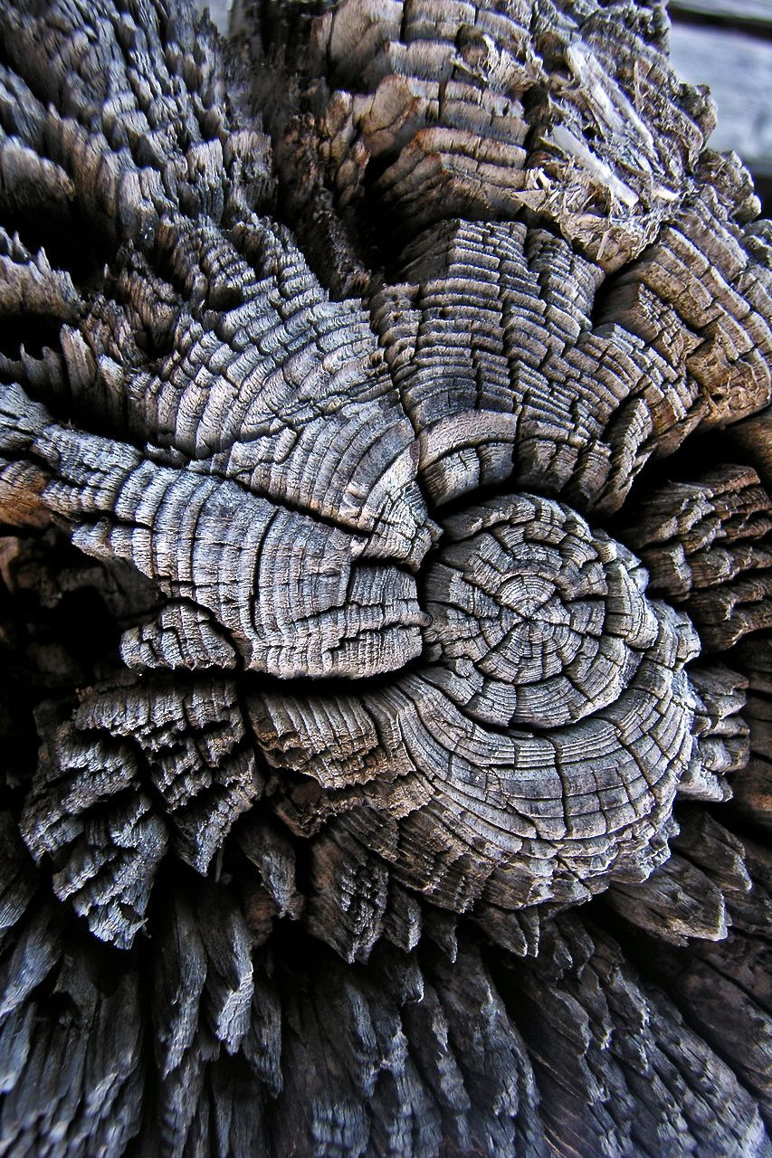 Form And Texture : A decaying tree stump it s difficult to tell precisely