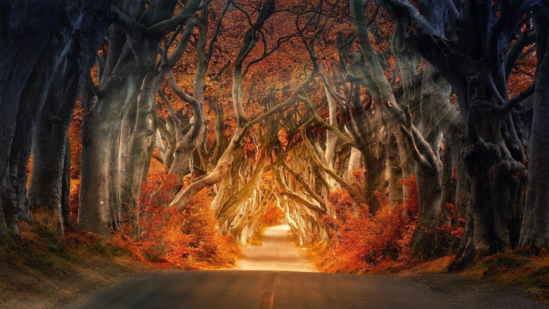 Dark Forest Road 1920x1080 Dark Hedges Hedges Nature Images