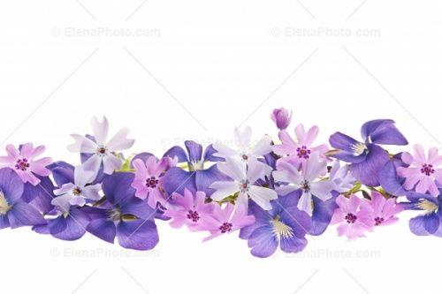 Spring Flower Border Clip Art Purple Spring Flowers Clip Art