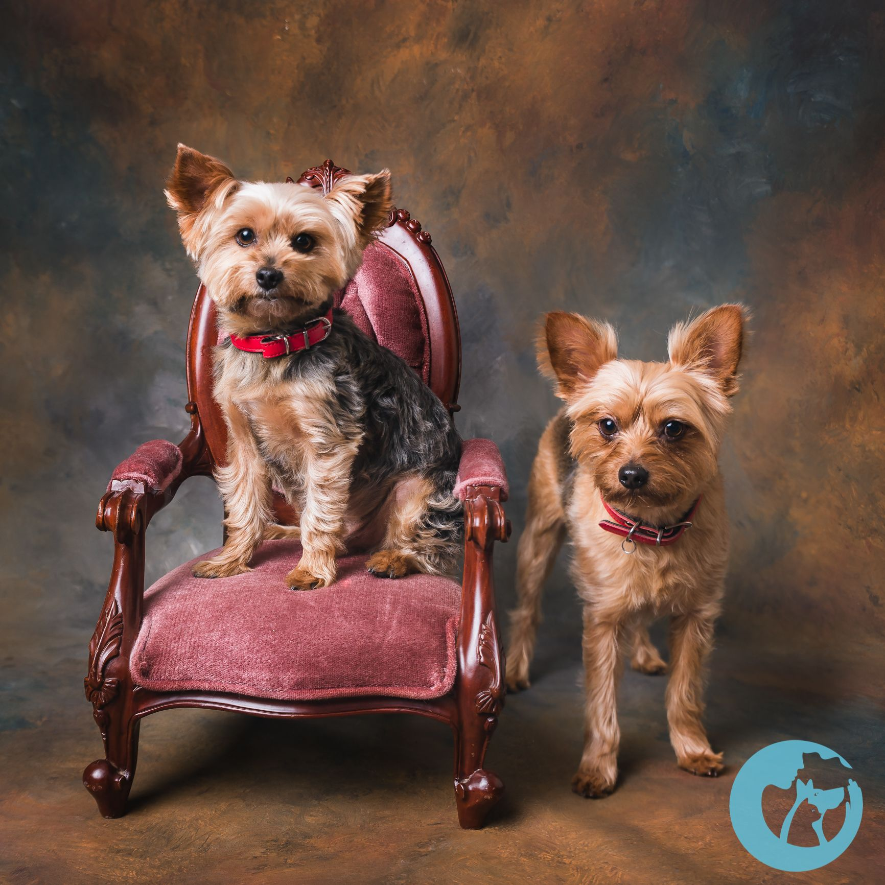 The Only Dedicated Pet Portrait Studio Located In Chesapeake