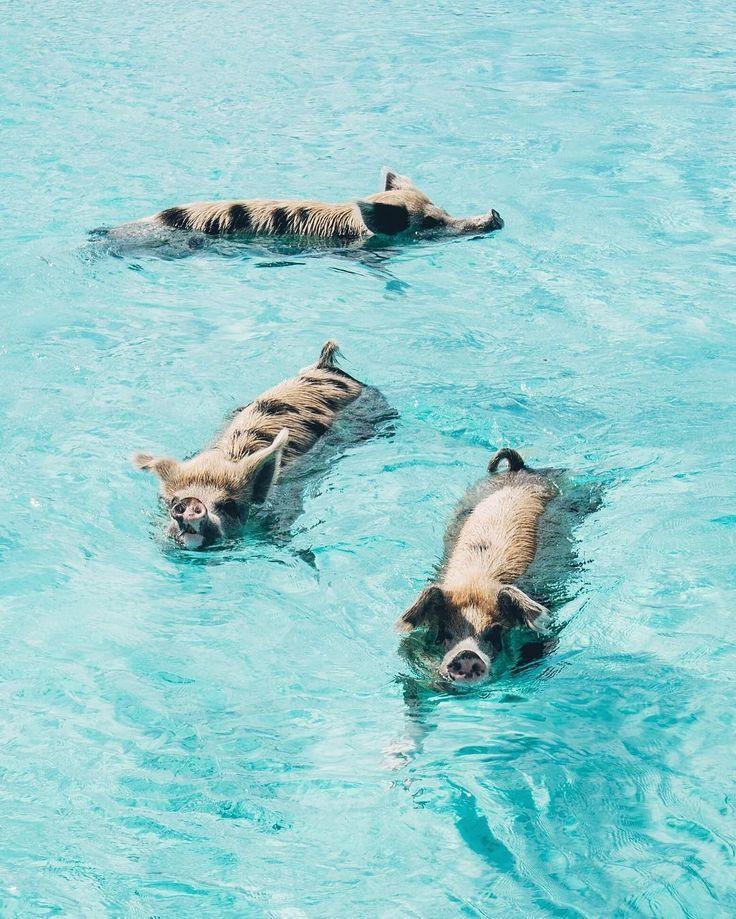 Bahamas Urlaub: Bucht jetzt eure Reise ins Karibik-Paradies #travelbugs
