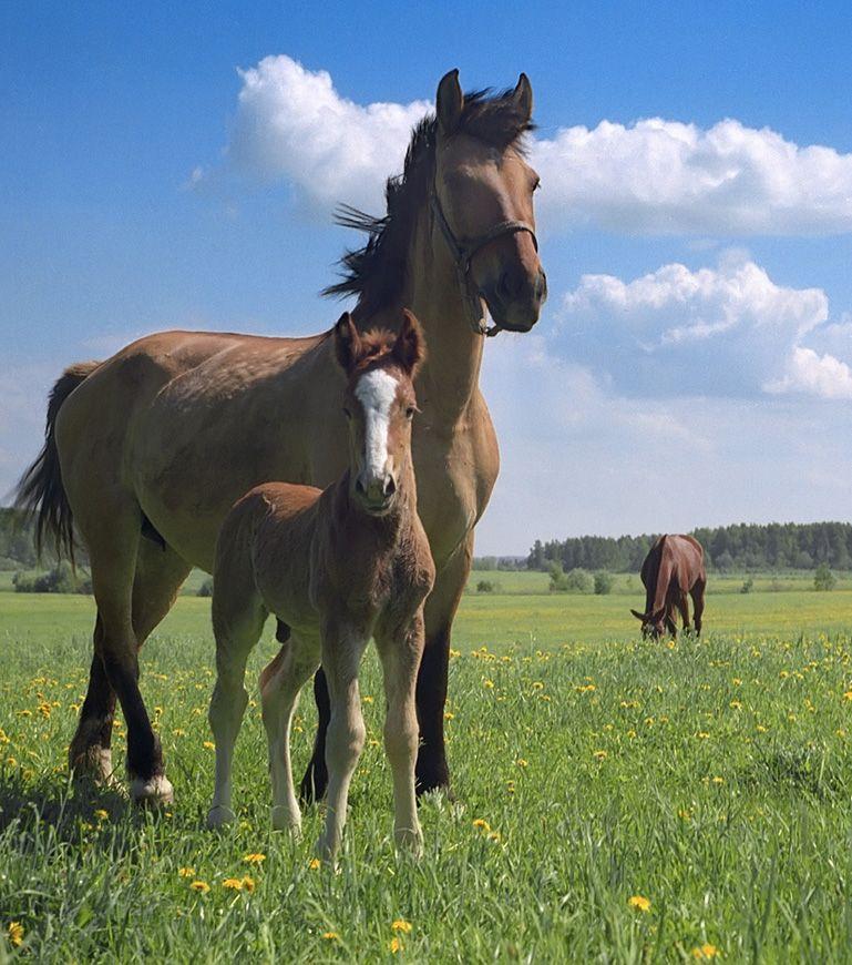 она дом с конями на коломенской фото тканях организма нарушен