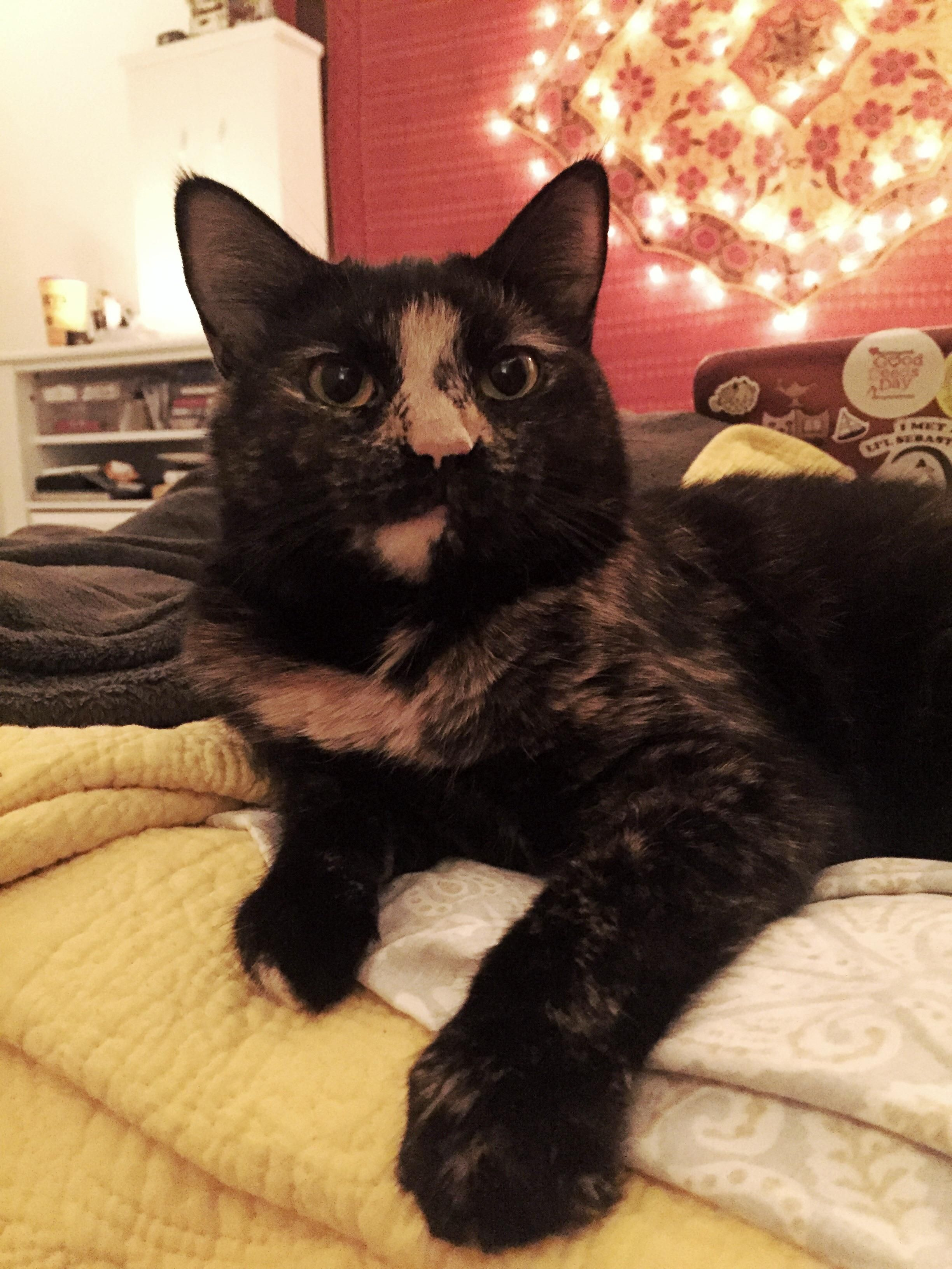 Meet Ino! I adopted this angel for free from Craigslist