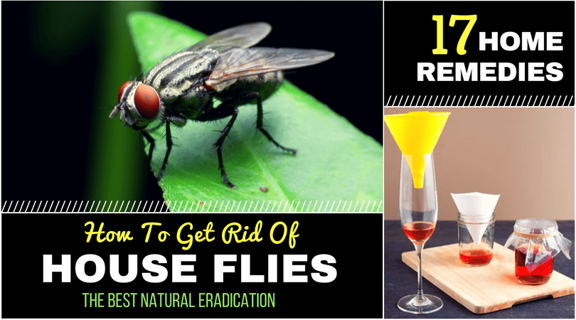 65478badfbb528651be56b69d7c46dda - How To Get Rid Of Green Flies In The House