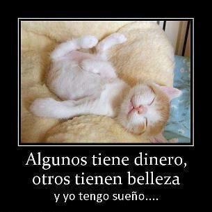 Pin De Rachel Reece En Espanol 1 Realidades Gato Gracioso Gatitos Divertidos Meme Gato