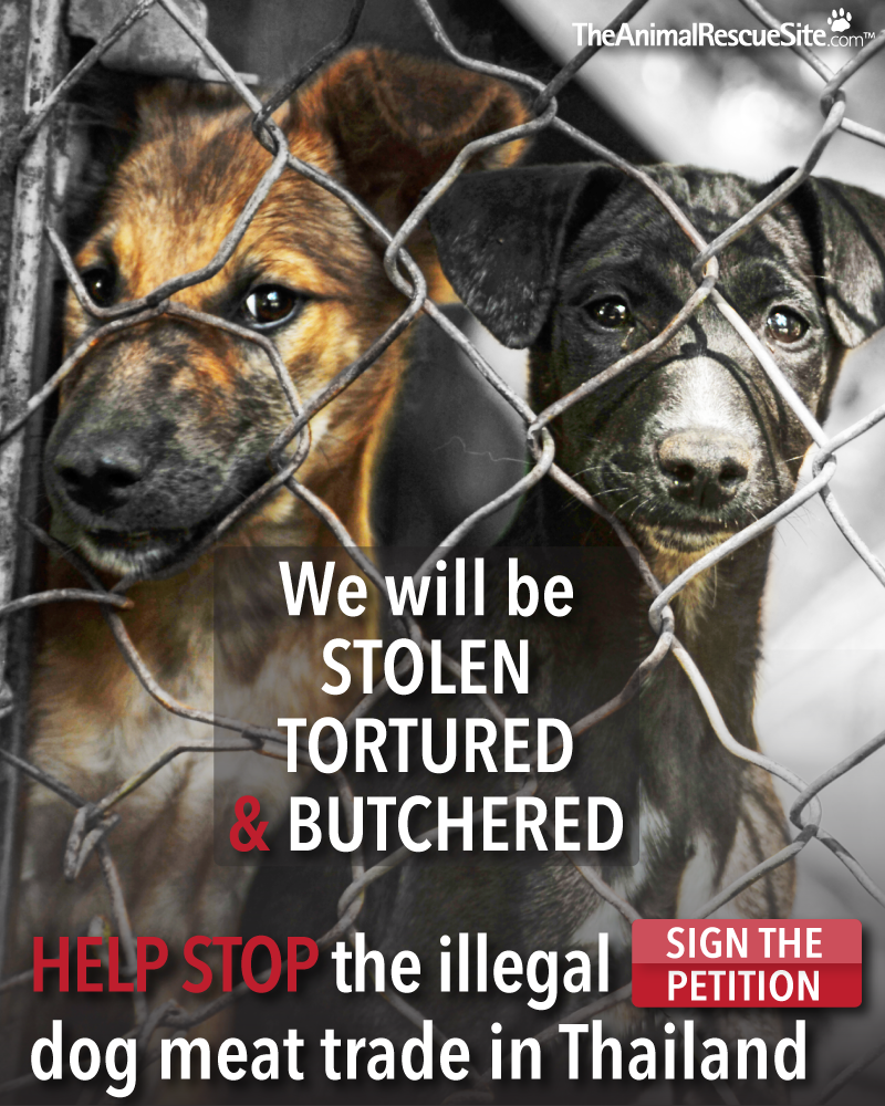 help shut down the illegal dog meat trade in thailand sign the
