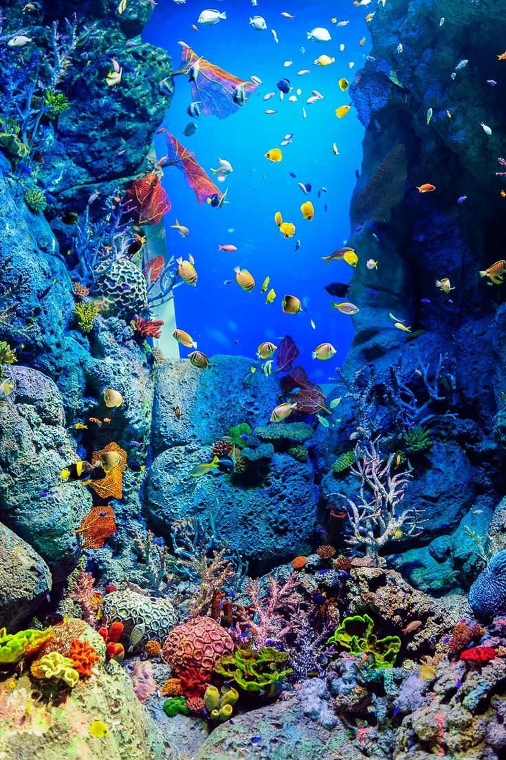 Pin de Conni en garden | Pinterest | Vida marina, Marino y Vida