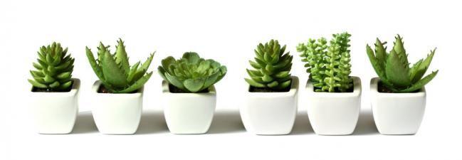 decoracion con plantas de interiores buscar con google