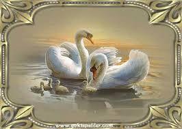 Kuğular…