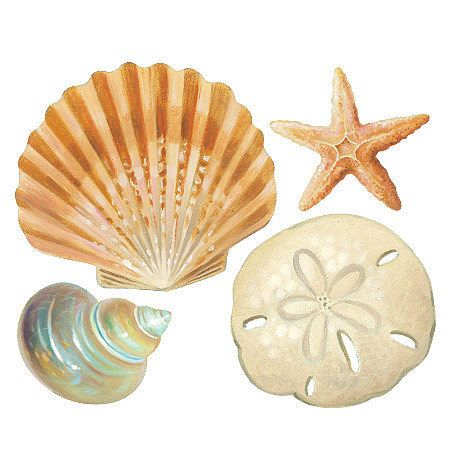 Merveilleux Wallies Seashells Wall Stickers 16 Decals Bathroom Decor Shells Ocean Sea  Beach | EBay