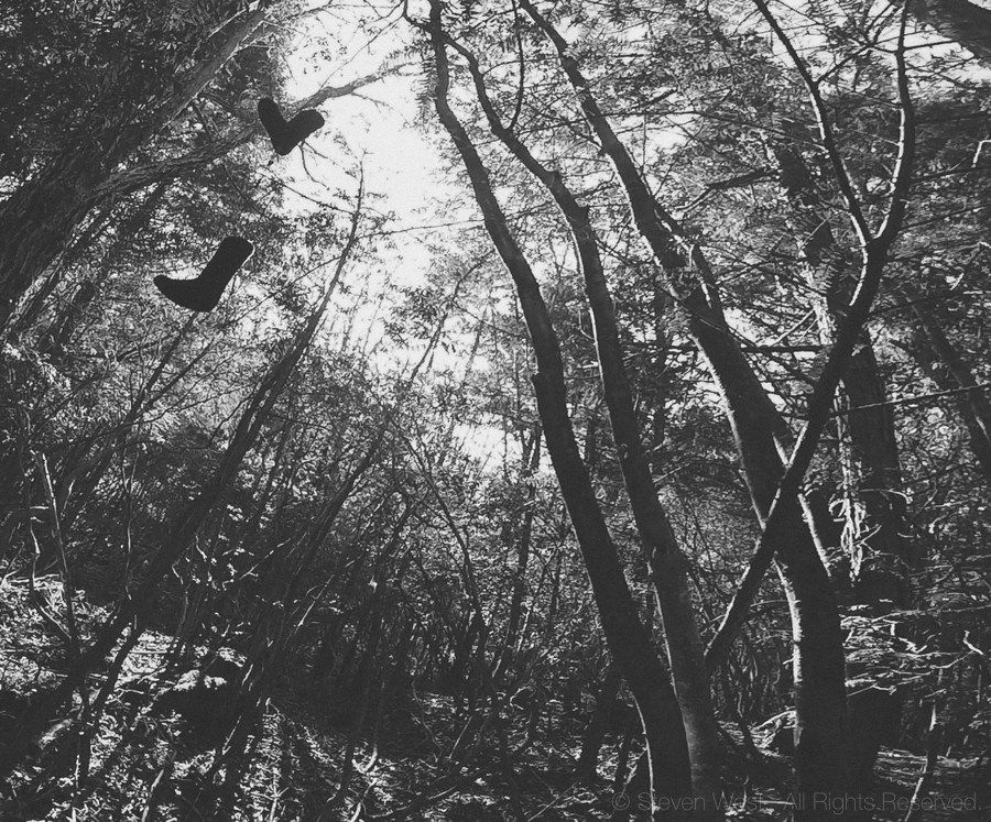 New Year in Aokigahara, the 'Suicide Forest' – steven.west