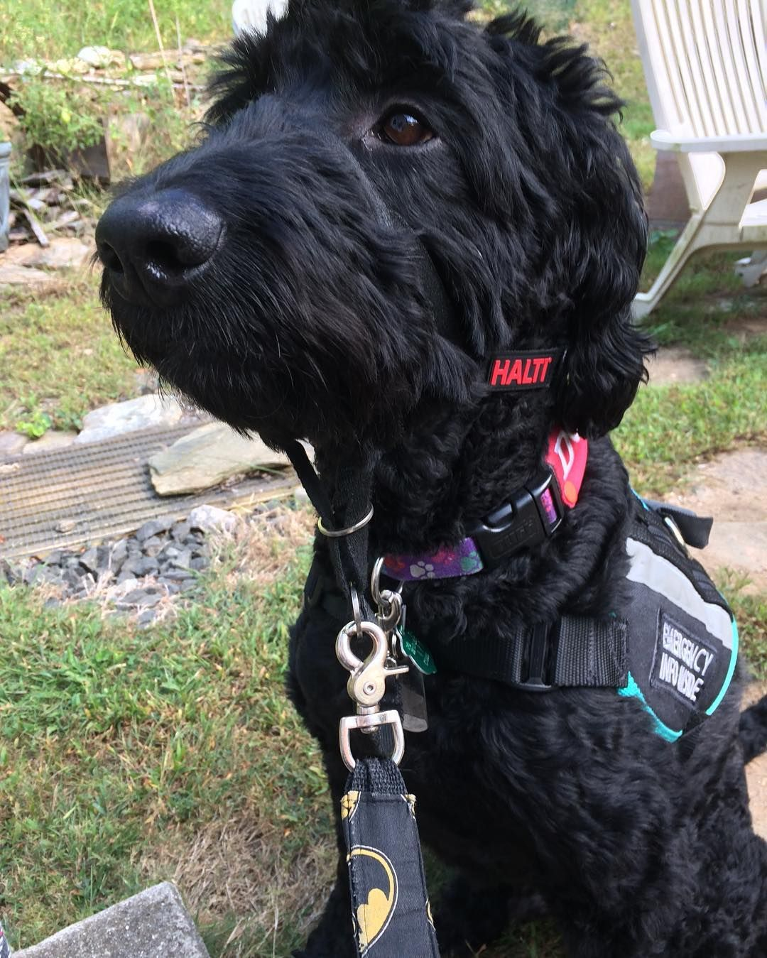 Pin on Working Service Dogs
